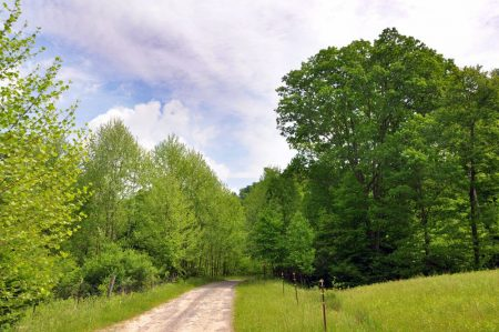 Little Creek Forest 017