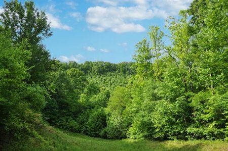 Little Creek Forest 018
