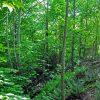 Little Creek Forest 021