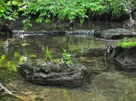Little Creek Forest 022