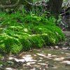 Little Creek Forest 024