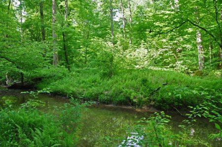 Little Creek Forest 025