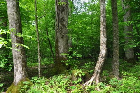 Little Creek Forest 027