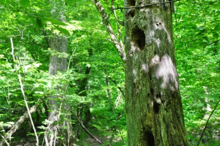 Little Creek Forest 028