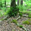 Little Creek Forest 029