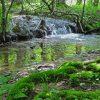 Little Creek Forest 030