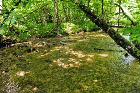 Little Creek Forest 032