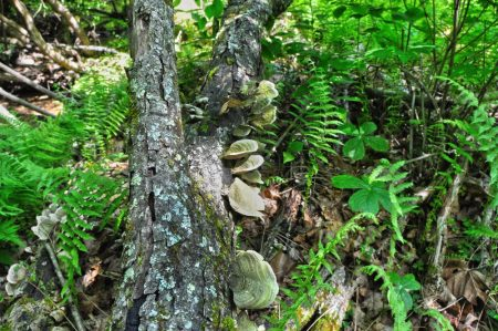 Little Creek Forest 033