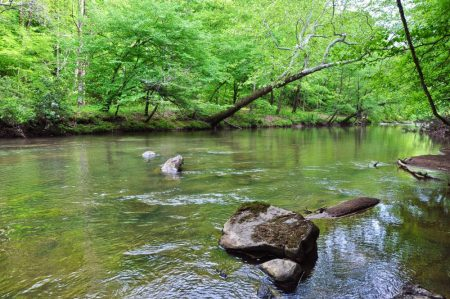 Moss Rock 021