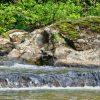 Moss Rock 022