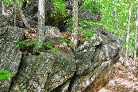 Moss Rock 044