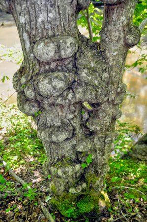 Moss Rock 046
