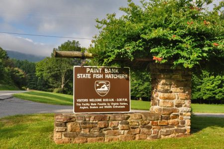 9 Springs Farm 039