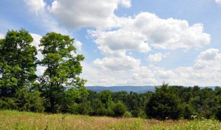 Bud Ridge Farm 002