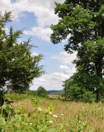 Bud Ridge Farm 009