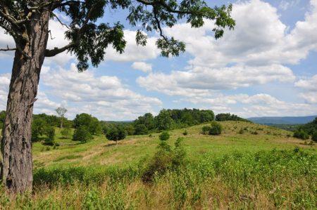Bud Ridge Farm 015