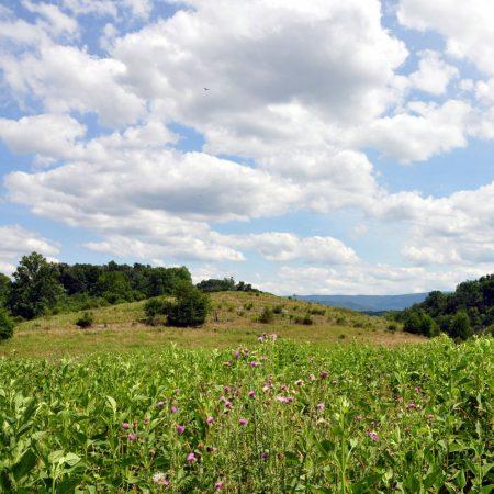 Bud Ridge Farm 023