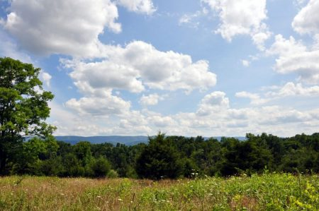Bud Ridge Farm 026
