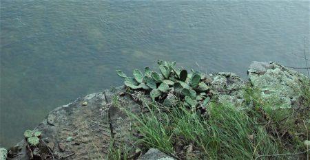 Falls Cove Bluffs 005