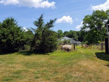 Meador Berry Farm 025
