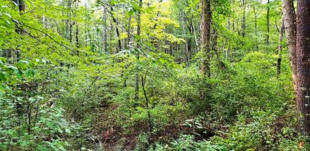 Piney Branch Forest 004