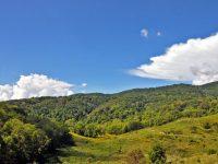 RYDER FOREST