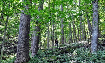 Ryder Forest Tour 006