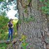 Ryder Forest Tour 027
