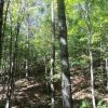 Anderson Forest Tour 011