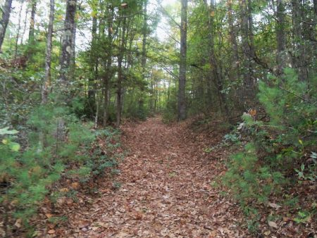Anderson Forest Tour 022