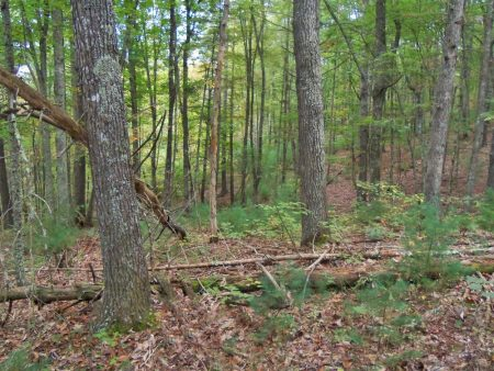 Anderson Forest Tour 024