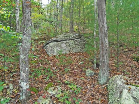 Anderson Forest Tour 025