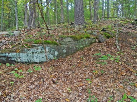Anderson Forest Tour 032